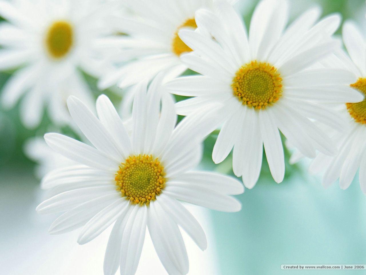 fond_ecran_fleur_06_1280x960